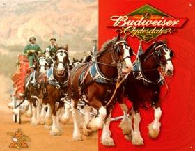 Wallpaper Cavalli Budweiser Poster