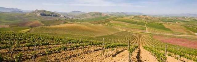 Vigne di sicilia